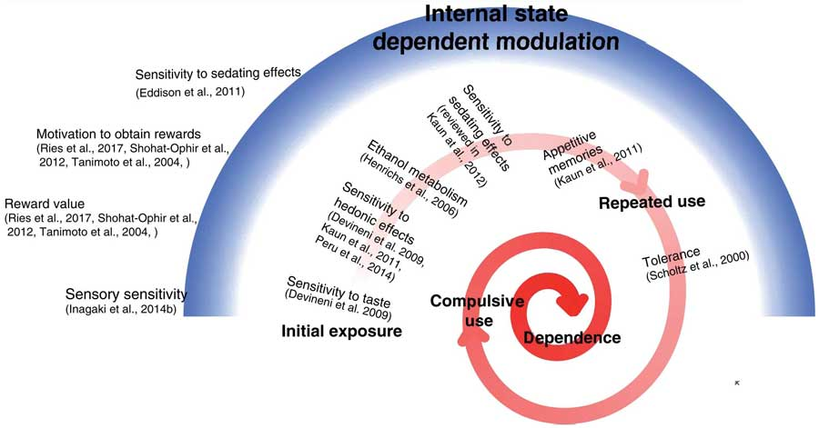 Schematic model illustrating the genetic and motivational elements that influence the likelihood of progressing from initial exposure to repeated use. Red spiral depicts the multistage progression from initial drug exposure to drug dependence and addiction and the behavioral features that are shaped by molecular and neuronal mechanisms. Blue arc depicts the way by which internal state can modulate different features in reward processing via molecular and neuronal mechanisms affecting sensory sensitivity to reward related cues, the motivation to seek and obtain rewards, and the reinforcing value of the consumed reward.