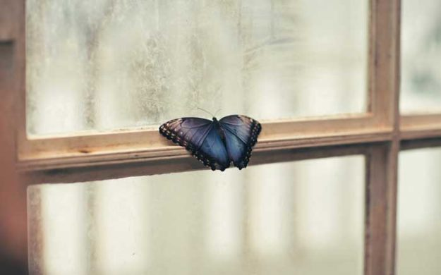 butterfly-perched-on-window-900px